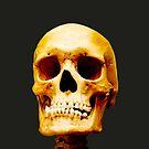 Head Skeleton by Mats Silvan