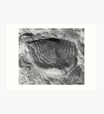 Leptaenid brachiopod fossil from Usk, Monmouthshire Art Print