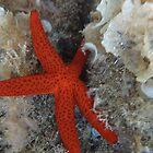 Starfish by Ana Belaj