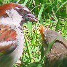 Sparrow Light by tkrosevear