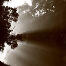 ...bush dawn by phillip wise