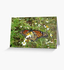 Monarch on Bidens alba Greeting Card