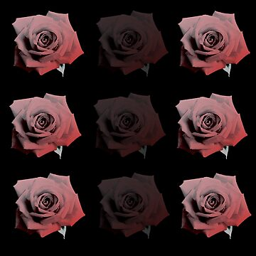 Roses by zaxart