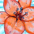 lily study by SugaredTea