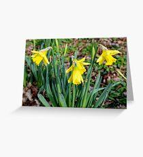 Daffodils, Greeting Card
