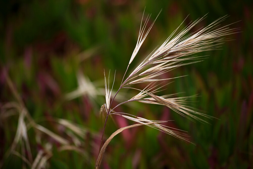 Flower by rtuttlephoto