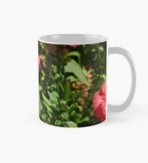 Dianthus Tasse (Standard)