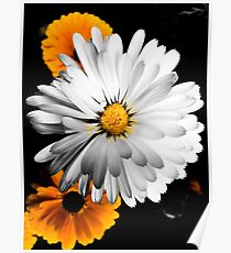 Gold and White Flowers on Black Background Poster