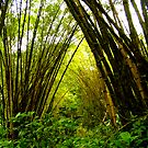 Bamboo Forest by JACONNI