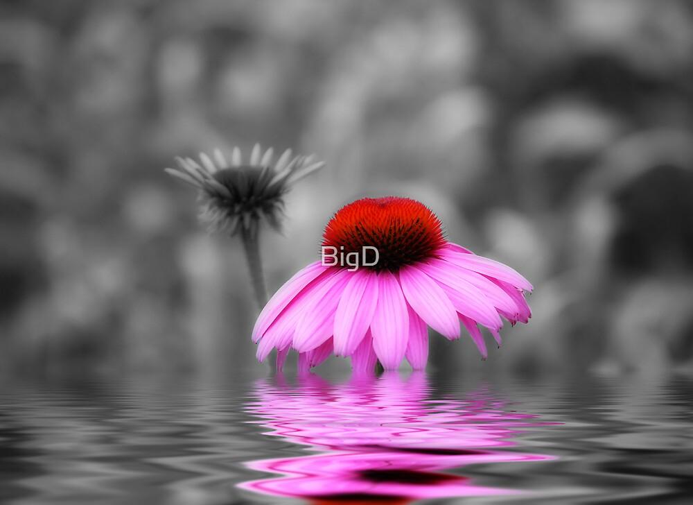 Pink by BigD