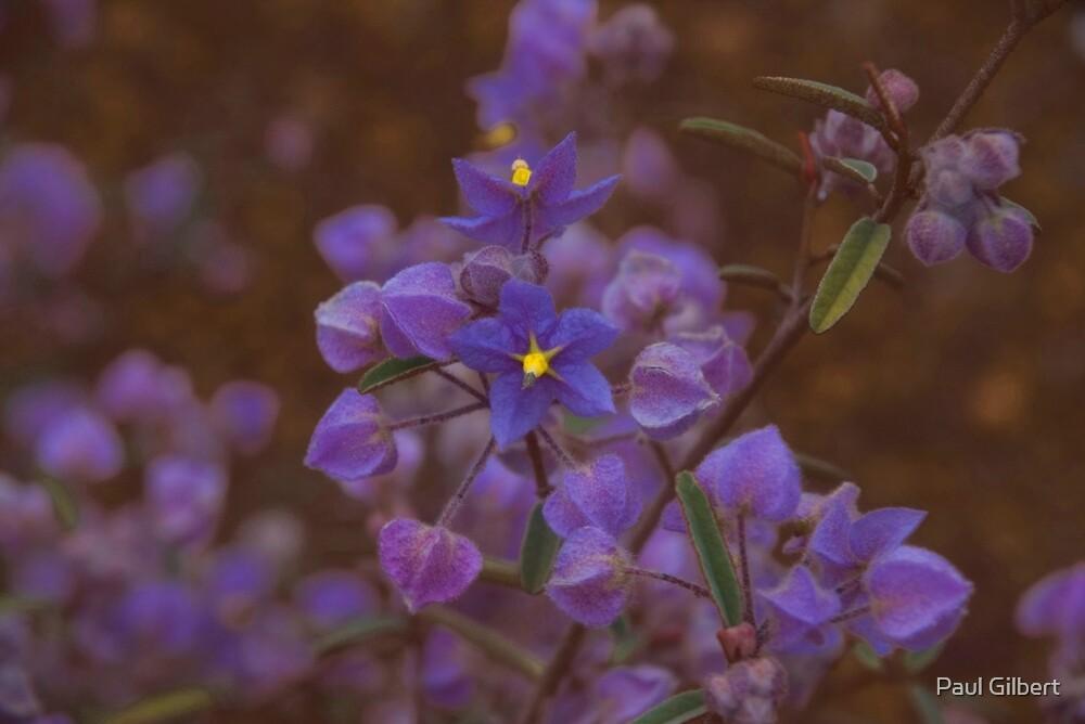 Australian Wild Flowers #3  by Paul Gilbert