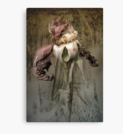 Rust 'n Roses ~ #2 Canvas Print