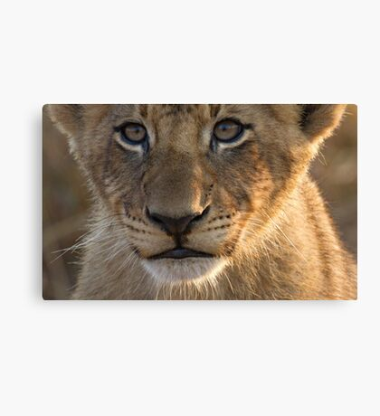 Sparta Lion Cub Canvas Print