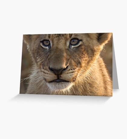 Sparta Lion Cub Greeting Card