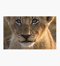 Sparta Lion Cub Photographic Print
