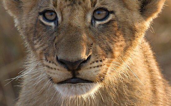 Sparta Lion Cub by Michael  Moss