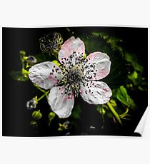 Pink and Yellow Dainty Flower Poster