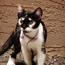 Calico Kitty by down23