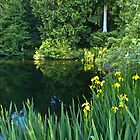BETH'S POND WITH YELLOW IRIS  by Elaine Bawden