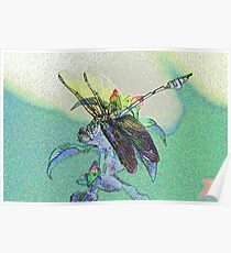 colourful macro dragonfly on leaf  Poster