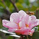 flowers are a buzz. by geof