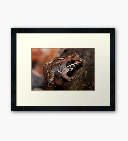 03 Woodland Treasures of the Ottawa Valley (Series) Framed Print