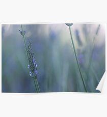 Minimal Lavender Poster