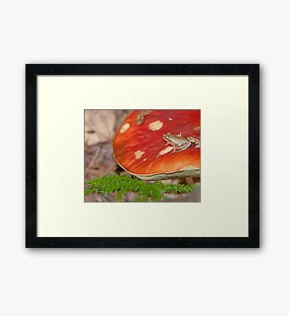 01 Woodland Treasures of the Ottawa Valley (Series) Framed Print