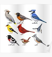 The year of the bird (North America) Poster