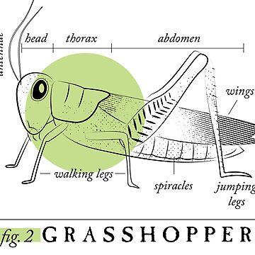 Fig. 2 Anatomy of a Grasshopper by MudAndMarrow