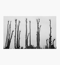 The Tall Ones Photographic Print
