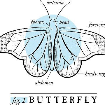 Fig. 1 Anatomy of a Butterfly by MudAndMarrow
