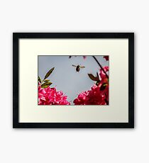 Bumble Bee Flying Framed Print