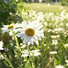 In Bloom by Ellinor Advincula