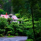 Fern House by James Cole