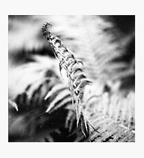 about the fern Photographic Print