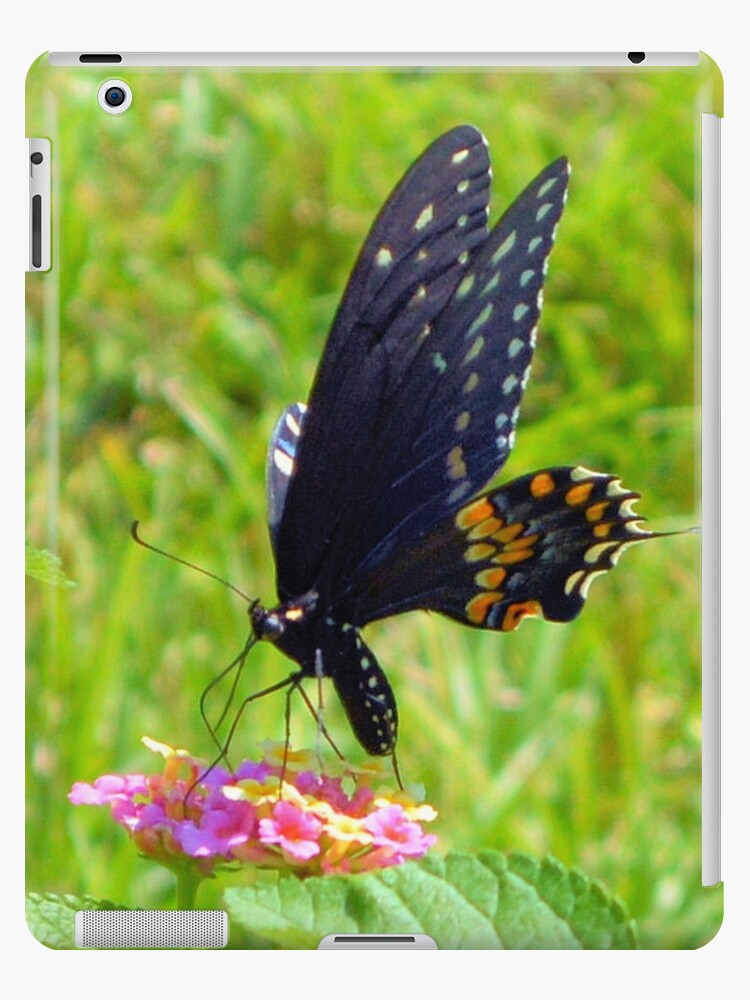 The Pipevine Swallowtail Butterfly by Dawne Dunton