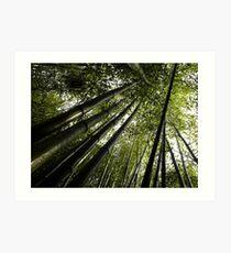 #868  Bamboo Art Print