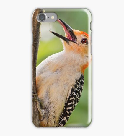 Woodpecker's Tongue iPhone Case/Skin