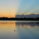 duck rays by cliffordc1