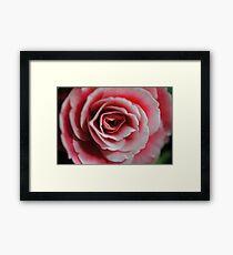 Pink Begonia Close Up Framed Print