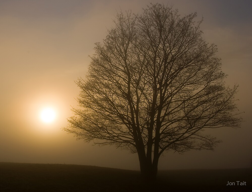 Foggy tree in East Yorkshire by Jon Tait