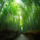 Bamboo Forrest by Ben Johnson