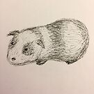 Guinea Pig by Lily Yuan