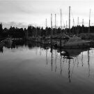 Oly Bay by Lady  Dezine