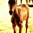 Baby Brown Horse by terrebo