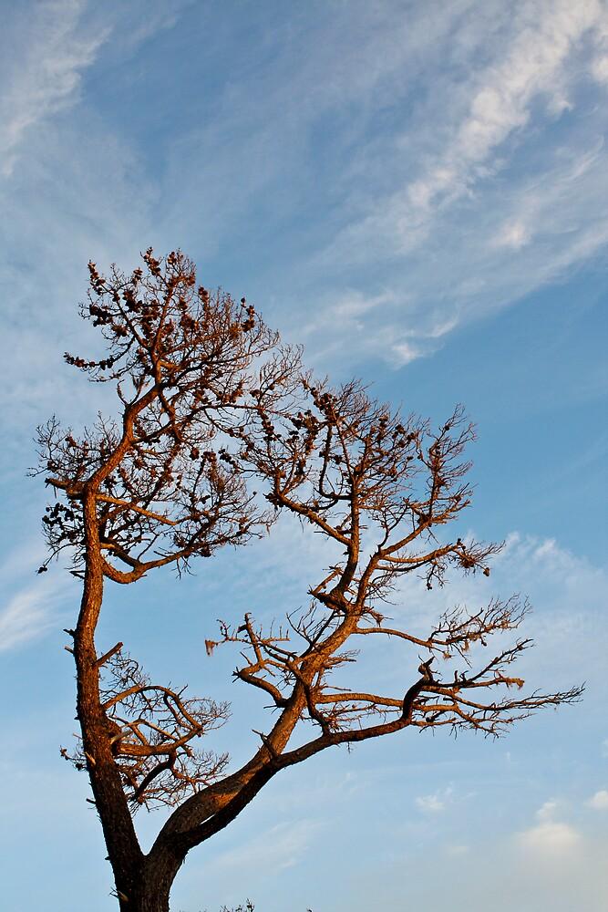 Tree by rtuttlephoto