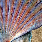 Scallop Shell on the Sand by Anna Lemos