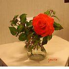 Salmon Rose by Gilberte