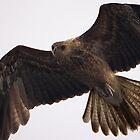 Masters of Flight by Adam Gormley